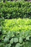 Jonge groente in het huistuin van het land royalty-vrije stock afbeeldingen