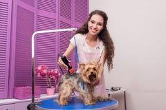 Jonge groomer die de terriërhond van Yorkshire met snoeischaar in orde maken en bij camera glimlachen stock foto