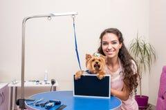 Jonge groomer en leuke van de de terriërhond van Yorkshire de holdings lege raad i huisdierensalon royalty-vrije stock afbeelding