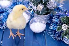 Jonge haan, weinig kuiken Dier, vogel, gevogelte Stock Foto