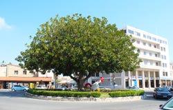 Jonge haanbeeldhouwwerk en zeer oude grote boom op het Limassol vierkant, Cyprus royalty-vrije stock foto