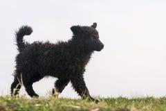 Jonge herdershond royalty-vrije stock fotografie