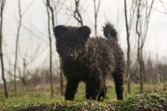 Jonge herdershond royalty-vrije stock afbeeldingen