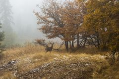 Jonge herten in vertroebelend bos Stock Foto