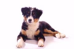 Jonge hond stock foto