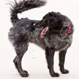 Jonge hond die achteruit eruit ziet royalty-vrije stock fotografie