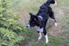 Jonge hond die zich op het gazon bevinden De hond ziet dicht eruit Zachte nadruk royalty-vrije stock foto's