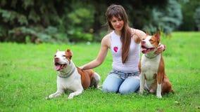 Jonge hondkuil bull terrier stock footage