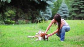 Jonge hondkuil bull terrier stock video