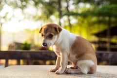 Jonge hondslaap op lijst stock afbeeldingen