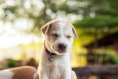 Jonge hondslaap op lijst royalty-vrije stock afbeelding