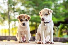 Jonge hondslaap op lijst royalty-vrije stock afbeeldingen