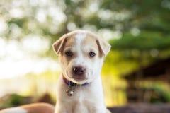 Jonge hondslaap op lijst stock foto