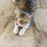 Jonge hongerige kat Hongerige mooie kat die op voedsel wachten Portret van een verraste hongerige kat stock fotografie