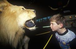 Jonge jongen die bij gevulde leeuw in het Museum en het Planetarium van Fairbanks in St Johnsbury, VT turen stock afbeelding