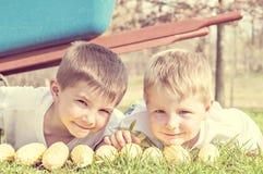 Jonge jongens weinig graanshuckers stock afbeeldingen