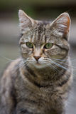 Jonge kat Stock Foto