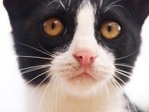 Jonge kat, (18) Stock Afbeeldingen