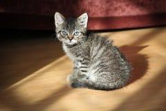 Jonge kat stock afbeelding