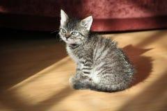 Jonge kat royalty-vrije stock afbeeldingen