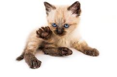 Jonge kat Royalty-vrije Stock Afbeelding
