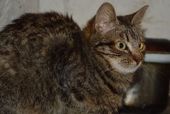 Jonge kat Stock Foto's