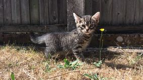 Jonge kat in de tuin stock footage