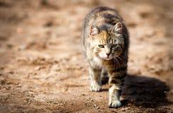 Jonge kat die in de zon zonnebaden Stock Foto's