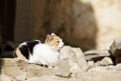 Jonge kat die van zon geniet Royalty-vrije Stock Foto's