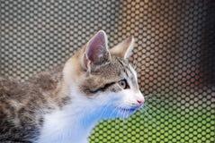 Jonge kat die waakzaam kijkt Stock Afbeeldingen