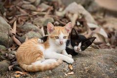 Jonge katjes die op de rots houden Stock Fotografie