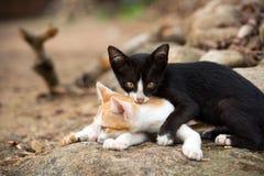 Jonge katjes die op de rots spelen Stock Foto's