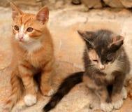 Jonge katten Royalty-vrije Stock Foto's