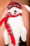 Jonge kattenslaap op zijn eigenaarsoverlappingen stock fotografie