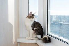 Jonge kattenzitting op venstervensterbank Stock Fotografie
