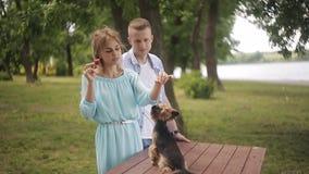Jonge kerel en mooi meisjesspel met hun huisdier in het park Een meisje voedt een hond een aardbei stock footage