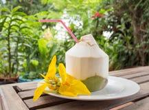Jonge kokosnoot Stock Afbeeldingen