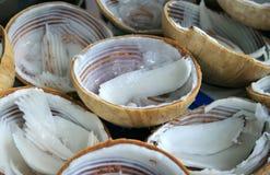 Jonge kokosnoten Royalty-vrije Stock Foto's