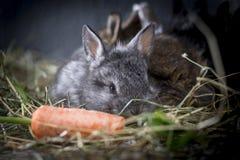 Jonge konijnen royalty-vrije stock afbeeldingen