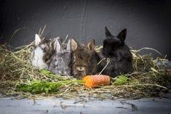 Jonge konijnen stock afbeelding