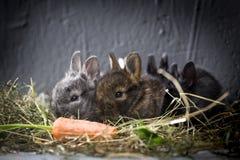 Jonge konijnen stock fotografie
