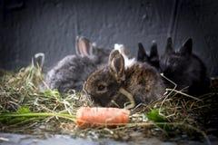 Jonge konijnen royalty-vrije stock foto