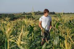 Jonge landbouwer die op gebied tijdens oogst lopen Royalty-vrije Stock Foto