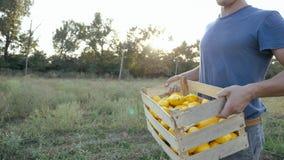 Jonge landbouwer die op het gebied met houten doos organische struikpompoen gaan Royalty-vrije Stock Foto