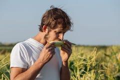 Jonge landbouwer die rijpe maïskolf proeven bij graangebied Stock Afbeeldingen