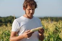Jonge landbouwer die rijpe maïskolf proeven bij graangebied Stock Fotografie