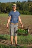 Jonge landbouwer die zich op het gebied bevinden en houten doos met peterselieinstallatie houden Royalty-vrije Stock Afbeelding