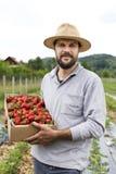 Jonge landbouwer op aardbeigebied die volledige wi van een kartondoos houden Royalty-vrije Stock Fotografie
