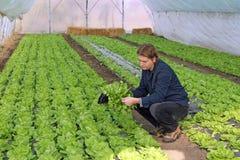 Jonge Landbouwer in Serre Royalty-vrije Stock Afbeeldingen