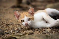 Jonge leuke potkat die op de grond leggen Royalty-vrije Stock Fotografie